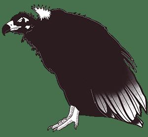 ave Escobalón