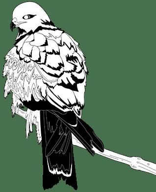 ave Salvia