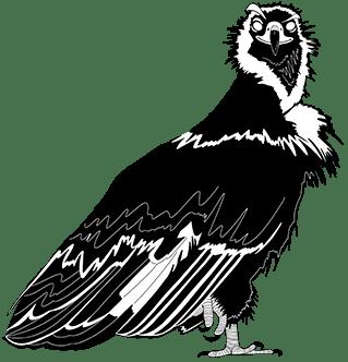 ave Timón