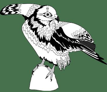 ave Yelmo