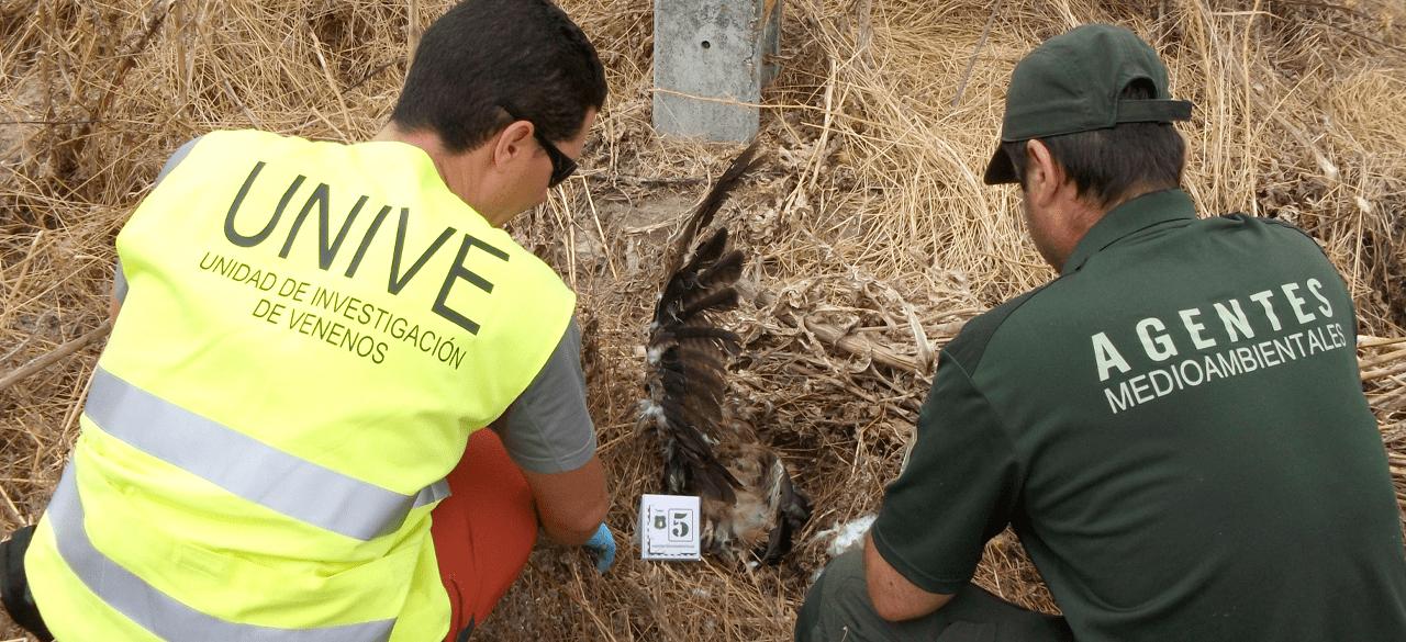 España lidera un proyecto internacional para detener los crímenes contra las especies silvestres