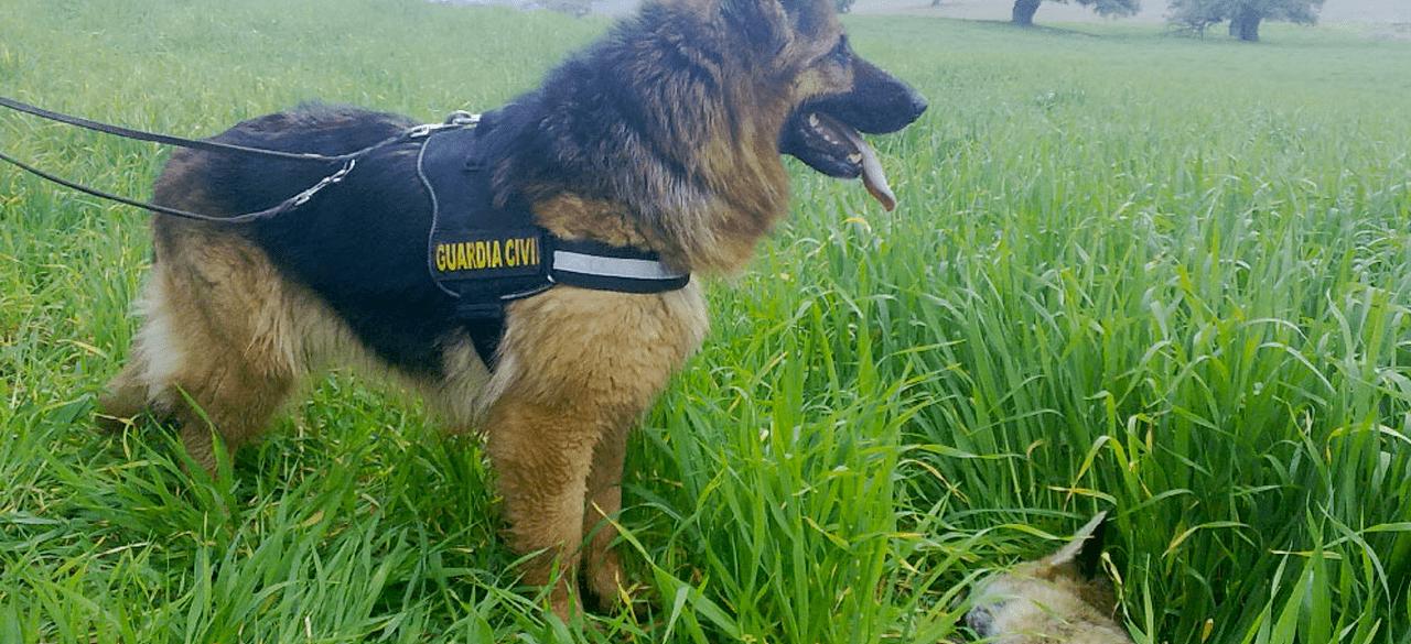 Reunimos a más de 100 expertos en las jornadas sobre delitos contra la fauna